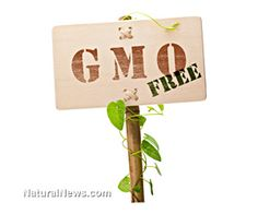 Use these five natural supplements to detox your body of toxic GMO foods