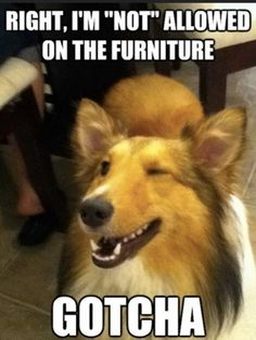 My dogs, my house, my rules.... Don't like dog hair on the furniture....then don't bother stopping by:)