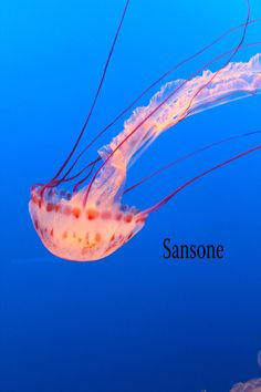 This photograph of a jellyfish was taken in August at the Monterey Aquarium. It would look perfect in an ocean themed babys room or any ocean themed room.  Sansone Photography