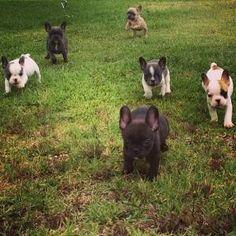 Puppy stampede!! by lorrie
