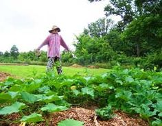 To have a healthy melon or potato patch, you don't need to till up acres of land. Follow these directions and have great crops with only minimal tilling. From MOTHER EARTH NEWS magazine.