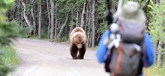 Alberta Camping: Bear Safety Tips Katmai National Park, National Parks, Yellowstone Camping, Thing 1, Appalachian Trail, Park Service, Wilderness Survival, Survival Skills, Survival Gear