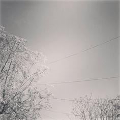 Otoño gris