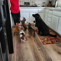 When it's Emisha CBD snack time! #CBDforDogs #DogCBD #PetCBD #PetHealth #DogHealth www.EmishaWellness.com