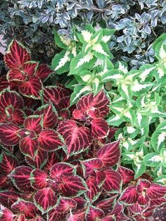 Plants for Pool Landscaping - no pool here, just love the look of these plants in a grouping.