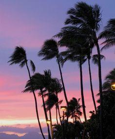 Evening Palms, Waikiki, Hawaii Copyright: Shawn Buresh
