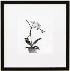Simon Schneiderman, Orchids1 | LIPMAN ART