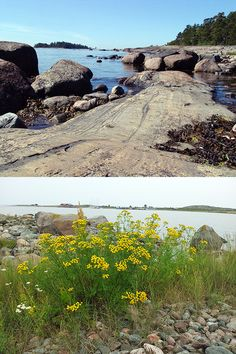 saariston luonto − nature - Natur #meri #seaside #Küste #spitzenerlebnisse #top #experience