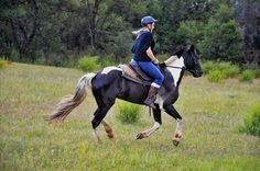 South Africa | Johannesburg | horse safari | freedom