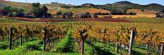 Que tal visitar Napa Valley e desgutar os melhores vinhos da região?