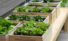 Michelle Slatalla, editor of Gardenista says vegetables can thrive in wine boxes or other crates.