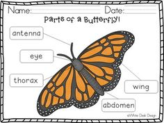 Butterfly Life Cycle! {Informational} Butterfly Life Cycle, Vocabulary Cards, Spring Is Here, Life Cycles, Desk, Life Cycle Of Butterfly, Desktop, Writing Desk, Office Desk