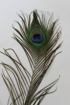 Peacock Decor Feathers for a Wedding or Event