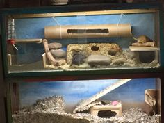 Gerbil Cages, Degu, Animals, Animales, Animaux, Animal, Animais, Dieren