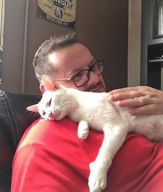 Silly Cats, Crazy Cats, Cats And Kittens, Animals Beautiful, Cute Animals, Morning Cuddles, Happy End, Grey Kitten, Letting Go Of Him