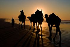 Camels on the Beach by retro traveler, via Flickr