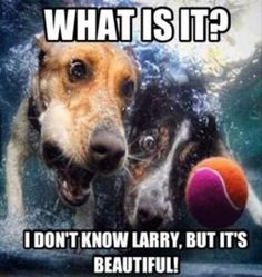 Get it Larry before it gets away!!!