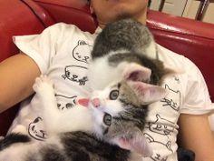 Kitten pile on the human Pretty Cool, Kitten, Cats, Shirt, Animals, Cute Kittens, Kitty, Gatos, Animales