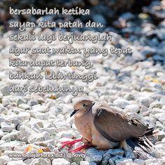 """Bersabarlah ketika """"sayap"""" kita patah dan sekali lagi berjuanglah agar saat waktu yang tepat kita dapat """"terbang"""", bahkan lebih tinggi dari sebelumnya #motivasi #motivation #motivator #renungan #pepatah #quotes #quote #quoteoftheday #inspirasi #inspiration #wisdom #morning #pagi #ID #indonesia #jakarta #instagrammania #instagood #instadaily #instagramania #instapic #instaquote #instanesia #instamood #instacool #iphonesia #photooftheday #instacollage #picoftheday"""
