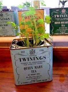 Çay Kutuları