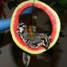 Food Fun - Glider Nursery                                                                                                                                                      More