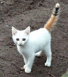 cats rare fur markings