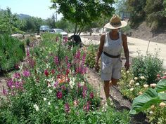 The Silver Lake Farms growing ground - LA urban flower farms on people's property