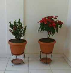 Flores hermosas. 🌹🌹