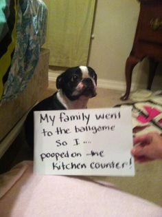 Dog Shame | My family went to the ballgame so I…pooped on the...