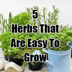 5 Herbs That Are Easy To Grow