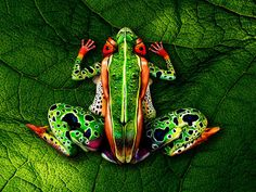 22 Incredible Artists Channeling Wild Animals With Their Bodies - Take a close look. That's not a frog.