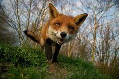 British Wildlife Photography 2011