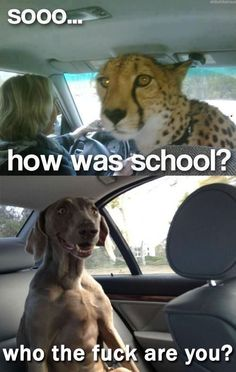 how was school, who the fuck are you? dog
