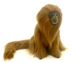 Lion Tamarin 4337   http://www.ebay.ca/itm/HANSA-Plush-Golden-Lion-Tamarin-4337-Portraits-Nature-Realistic-Animal-Monkey-/181390894646?pt=Stuffed_Animals_US&hash=item2a3bbd6636