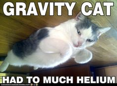 Wird eine unserer Bürokatze zum LOLCats-Internethype? ;-) Cats, Animals, Products, Gatos, Animales, Animaux, Animal, Cat, Animais