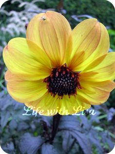 Wordless Wednesday: The Flower and The Fly