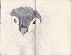 Why Do Penguins Wear Tuxedos? by Kaja Zalokar