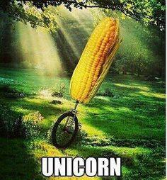 OMG. O. M. G. Unicorn.