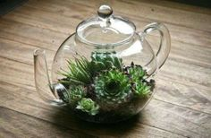 glazen theepot als mini-plantenwereld....