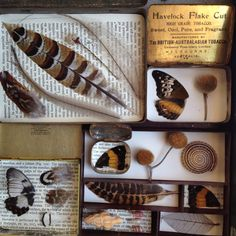 ≗ Feathered Nest of Hope ≗ bird feather & nest art jewelry & decor - The Naturalist Melbourne