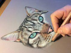 portrait animalier , portrait de chat