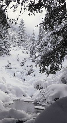 Snow covered stream. Stunning picture of winter. It even makes me feel cold looking at it. # WebMatrix 1.0