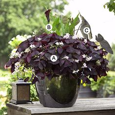 Go Classic with Black | This dramatic combination features contrasting foliage texture and color accented by interesting flowers. The dark glazed container is perfect here. | Better Homes and Gardens #containergarden