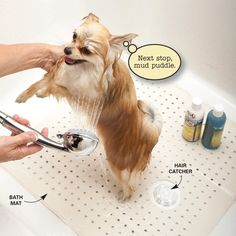 Turn the shower into a dog washing station