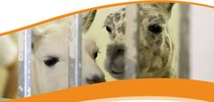 Open House, College of Veterinary Medicine, University of Illinois