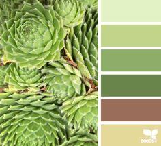 succulent greens