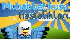 Muhabbet kuşu hastalıkları - Muhabbetkusum.com