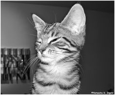 #Katze #Katzenliebhaber #Katzenbilder #Lunalinacat #catsagram #bestcat #catphoto #catsoftheworld #catoftheday #coolcat #happycat #catlove #instacat #lulucat #catlovers #catsareawesome #bestcats #instacats #catworld #crazycat Crazy Cats, Cool Cats, Cat Day, Cat Lovers, Cool Stuff, World, Animals, Weird Cats, Animales