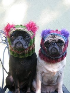2a4762ed080 a etsy seller makes these adorable hats for dogs - mostly frenchies and pugs .