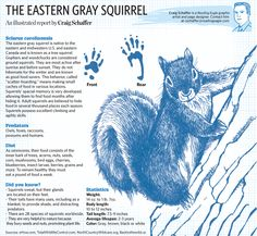 Today's sketchbook: A close-up look at the Eastern gray squirrel